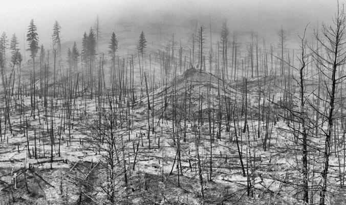 Burn zone along the North Thompson River, British Columbia. Photo: Adam Levine