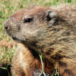 Special investigation finds Protect Our Winters, Punxsutawney Phil in cahoots