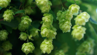 Hop to It: Your favorite flower, explained
