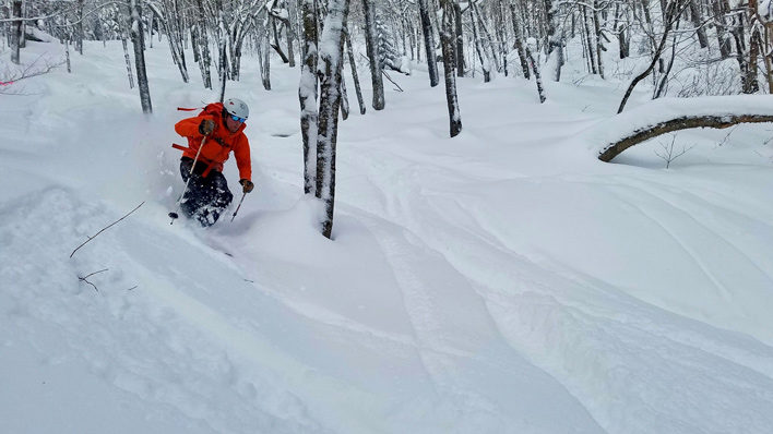 White Mountain National Forest Approves Two New Hampshire Glading Projects