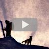 Video: Sun Dog